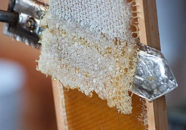 Забрус. лечебные свойства, польза и вред, как хранить, принимать медовый продукт пчеловодства