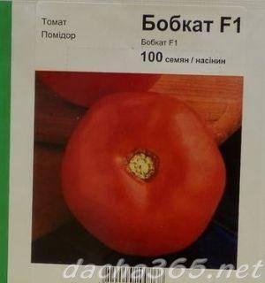 Чем интересен голландский томат бобкат и особенности его выращивания