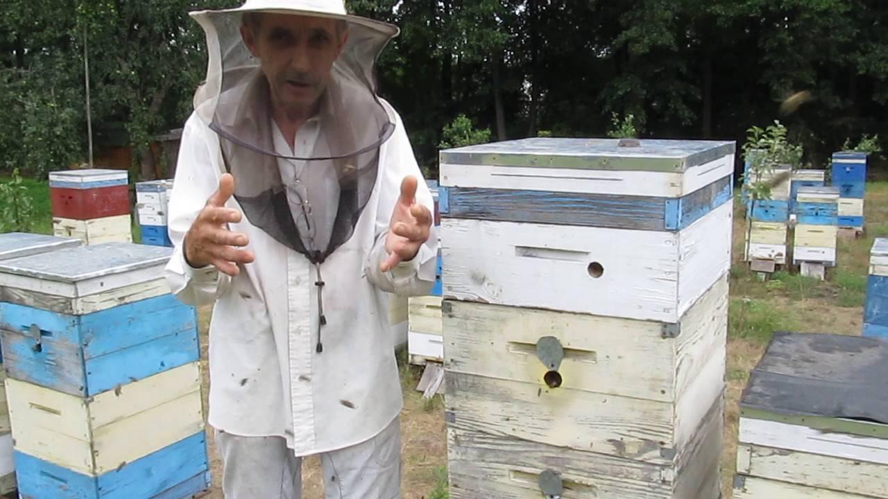 Окончательная подготовка пчел к зимовке в лежаках