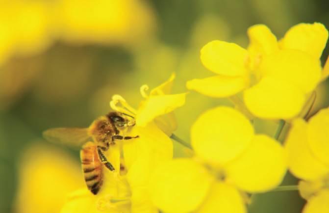 Сколько рамок с медом оставлять пчелам на зиму — выкладываем суть