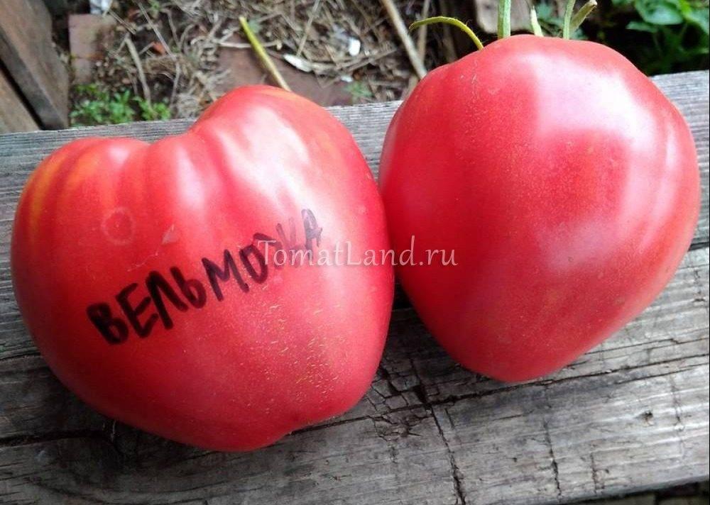 Томат ленинградский гигант: характеристика и описание сорта, урожайность
