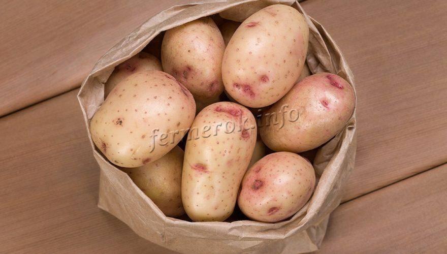 Картофель сорт синеглазка — эталон вкуса