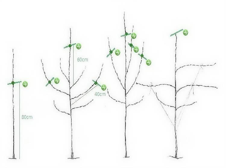Узнайте, как правильно обрезать яблони осенью? советы бывалых садоводов