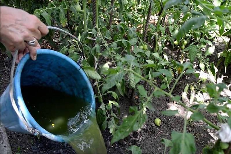 А удобрение под ногами — «сорняковая болтушка», или «травяной чай»