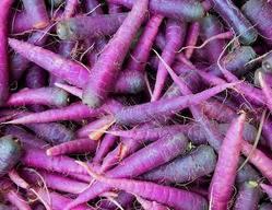 Фиолетовая морковь: описание и характеристика, отзывы