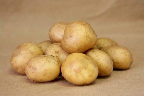 Описание ранней картошки джувел — когда собирать урожай