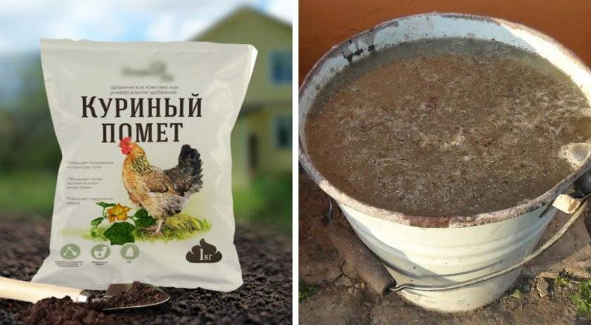 Как посадить грецкий орех