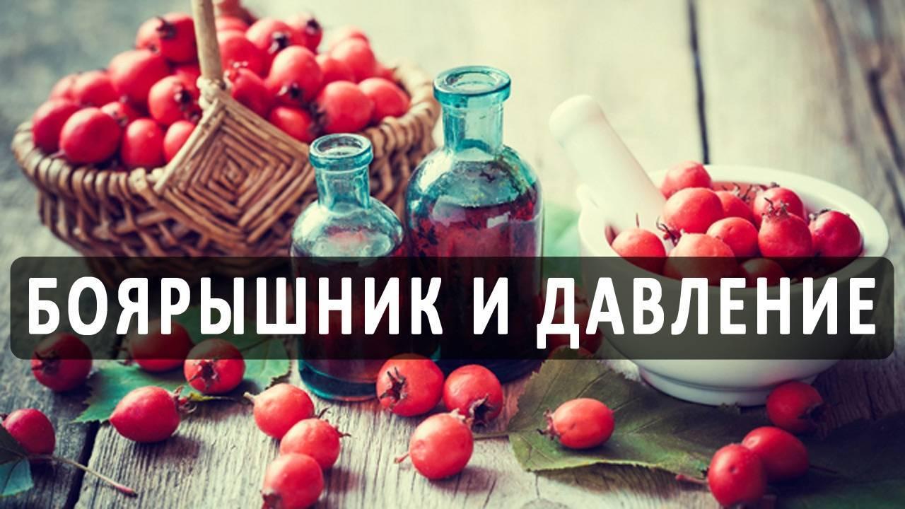 Боярышник от давления повышенного — ягоды грибы