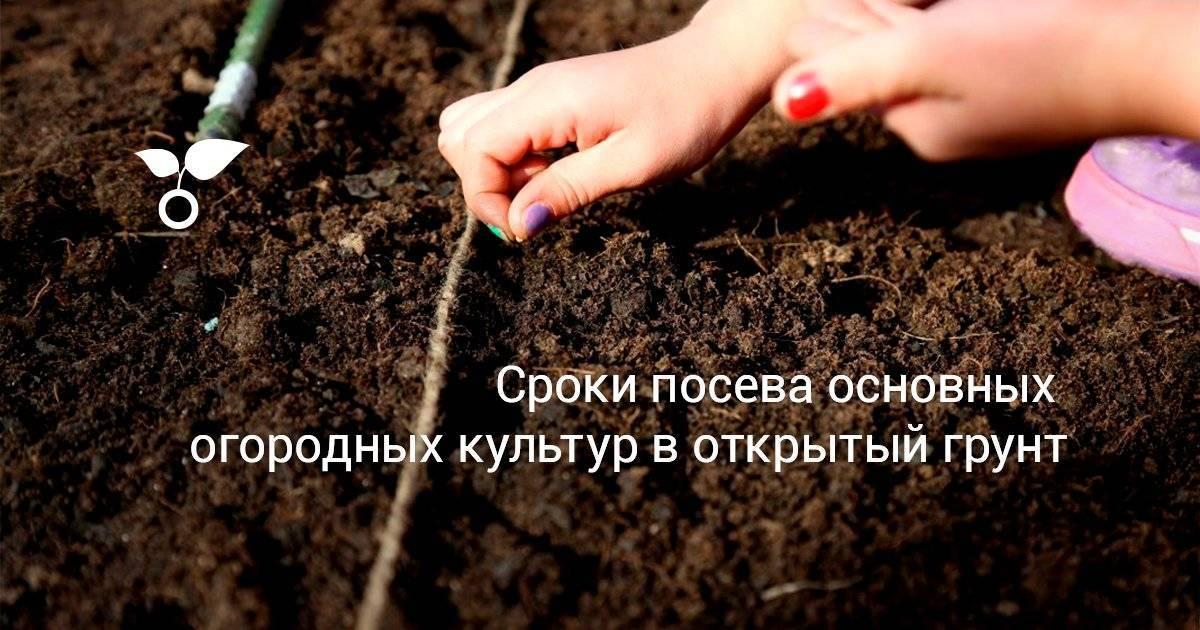 Картофель: посадка и уход в открытом грунте, уборка и хранение