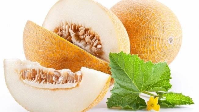 Дыня американский ананас — описание сорта, фото, отзывы, посадка и уход