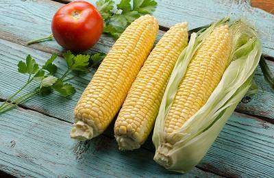 Чем полезна вареная кукуруза в початках