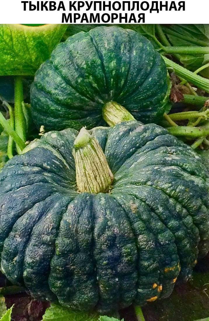 Характеристика и описание медового сорта тыквы «крошка»: выращиваем самостоятельно любимицу опытных фермеров