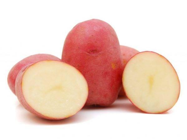 Описание картофеля сорта розалинд