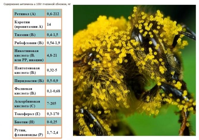 Цветочная пыльца: полезные свойства и противопоказания, как принимать