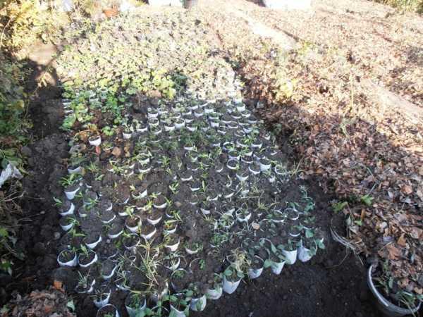 Посадка цветов осенью: какие цветы можно и нужно сеять под зиму