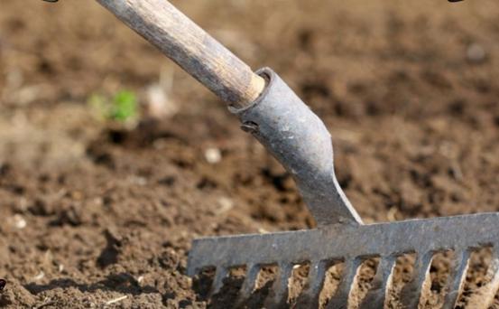 Выращивание и правильный уход за японской капустой
