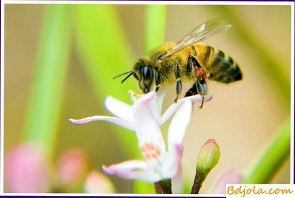 Объединение слабых пчелиных семей
