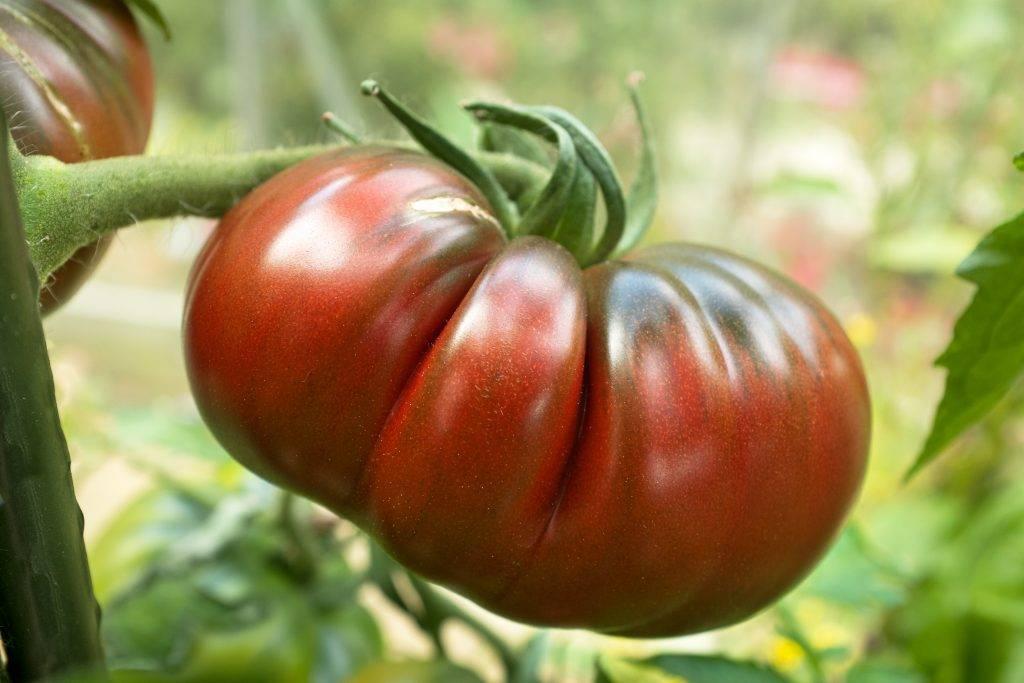 Томат черный ананас: описание и характеристика сорта с фото