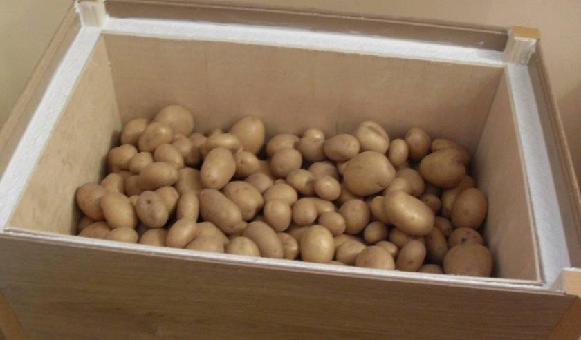 Где хранить картошку: какая температура должна быть зимой в подвале, а также чем характеризуются способы сбережения овоща в буртах, траншеях и других местах?