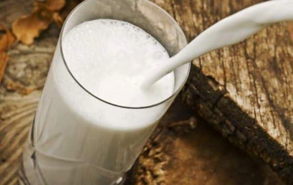 Почему горчит молоко у коровы зимой, осенью: причины, методы лечения