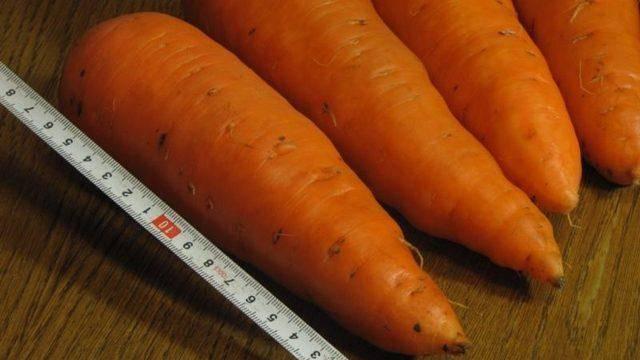 Лучшие сорта моркови для открытого грунта: фото, описания, отзывы