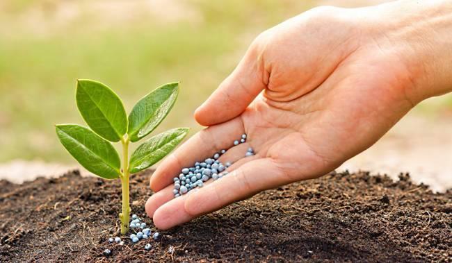 Удобрение карбамид: что можно удобрять, инструкция по применению