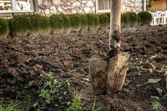 Чем обработать землю от фитофторы осенью: народные и магазинные средства