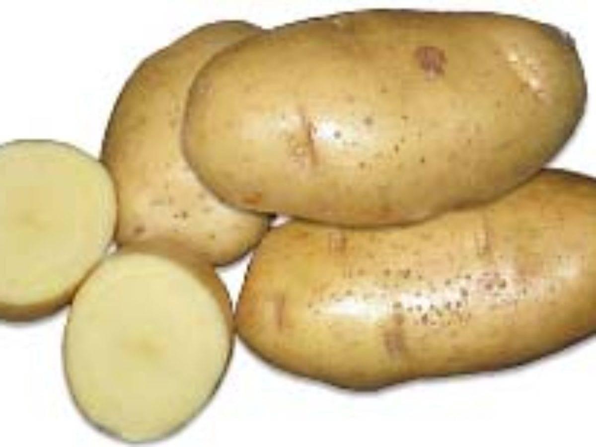 Картофель сантэ