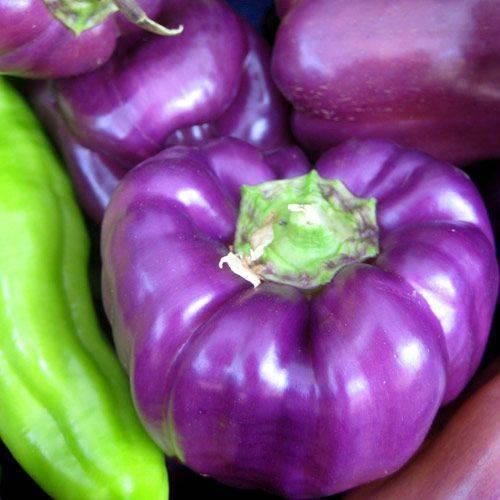 Сорта фиолетового перца