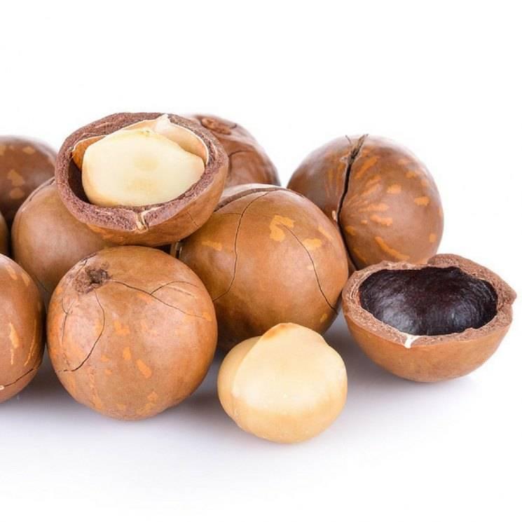 Макадамия орех. полезные свойства, рецепты для женщин, мужчин, детей. противопоказания