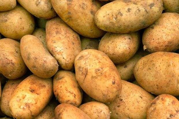 Описание картофеля винетта — что это за ранний сорт?