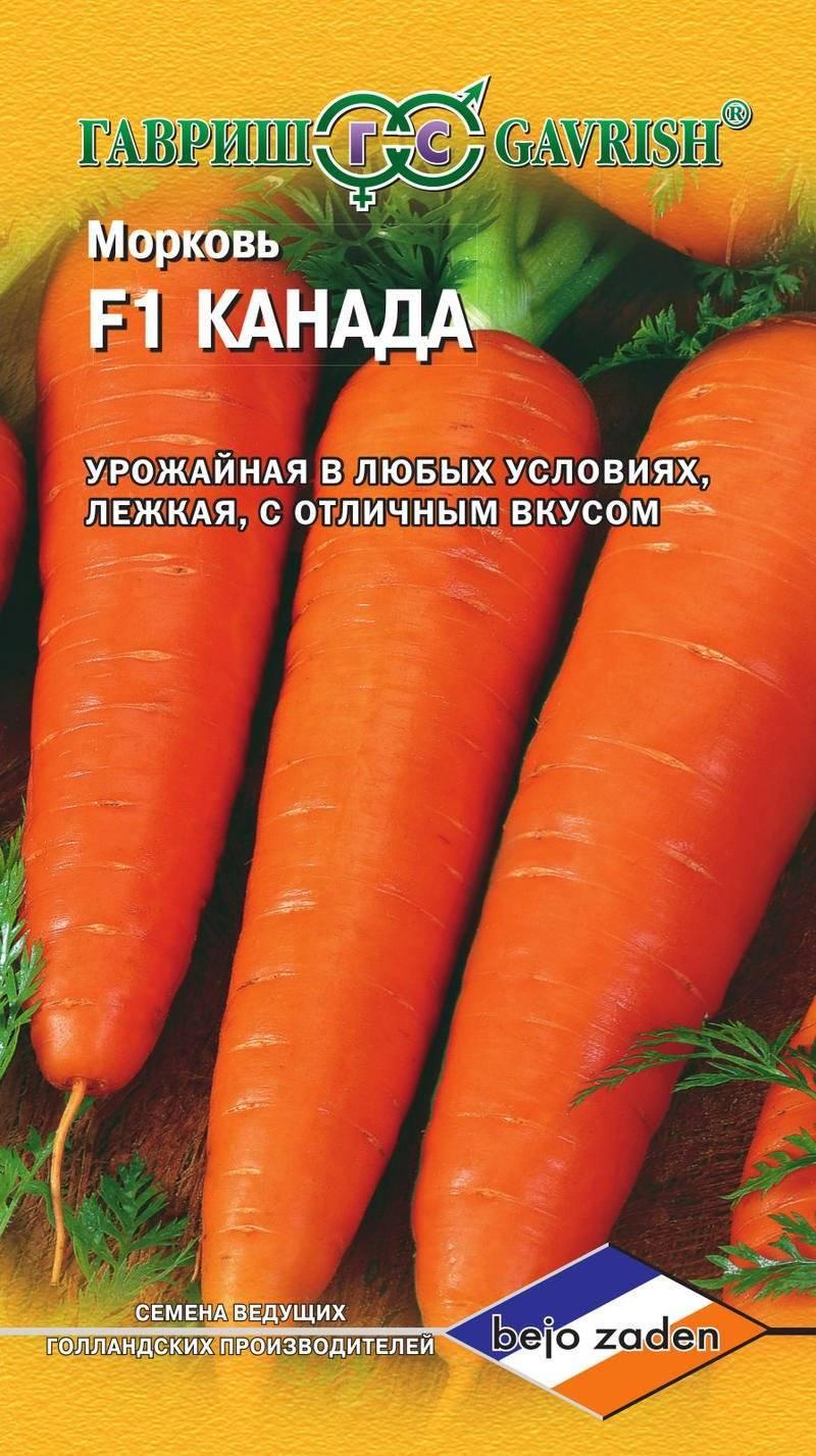 Высокоурожайный гибридный сорт моркови – канада f1. характеристика, особенности выращивания и хранения