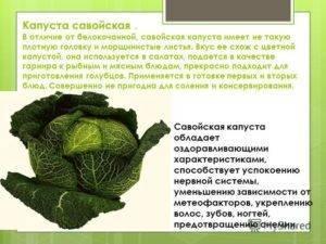 Савойская капуста — польза и вред для организма
