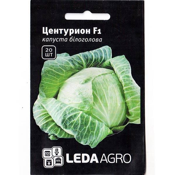 Среднепоздняя капуста бартон f1 – высокий урожай и неприхотливость в одной разновидности