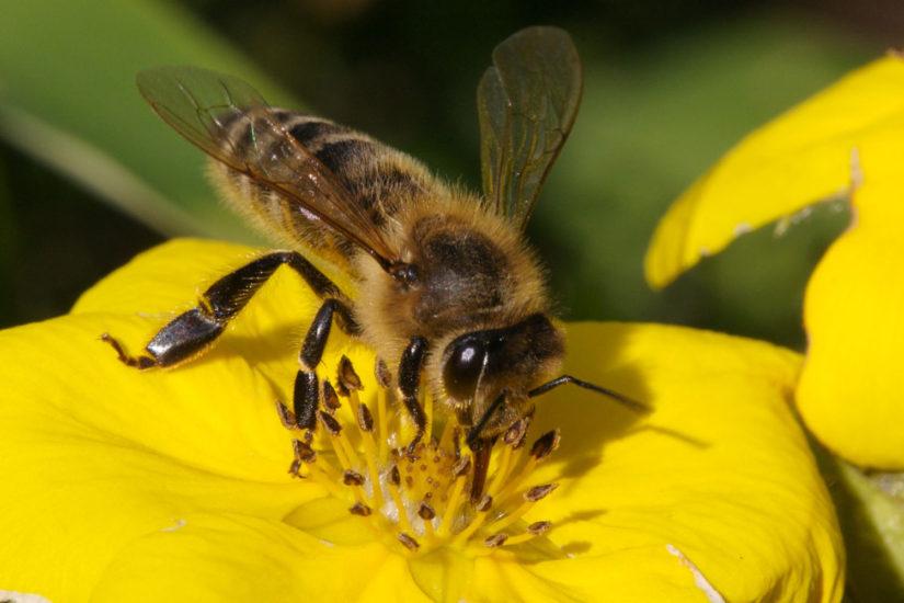 Лечение пчёл от гнильца
