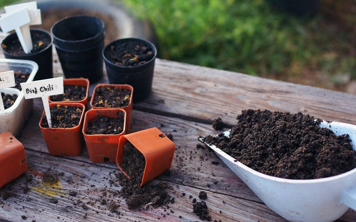 Как подготовить почву для рассады — советы опытных дачников