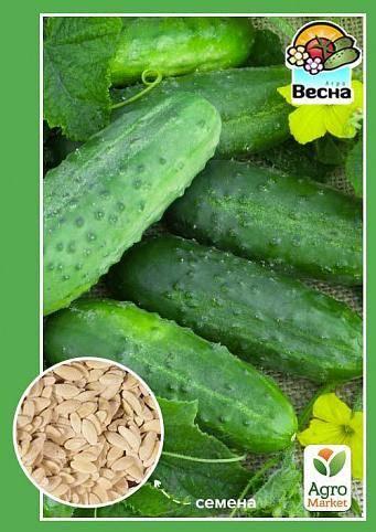 Высокоурожайный огурец журавленок f1: описание гибрида, секреты выращивания, отзывы