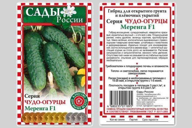 Урожайность и особенности выращивания огурцов «меренга f1»