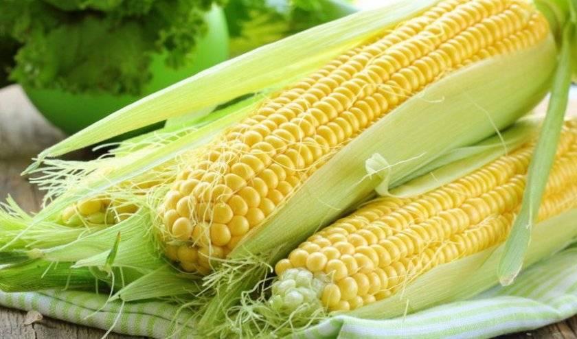 Ранняя сахарная кукуруза: выращивание, удобрение, уход