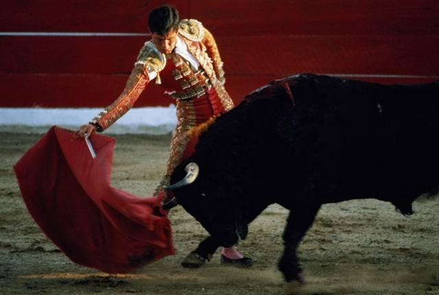 Так ли быки не любят красный цвет, как мы привыкли думать