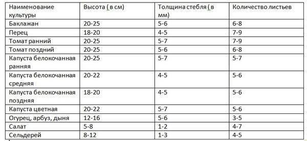Выбор температуры для рассады томата