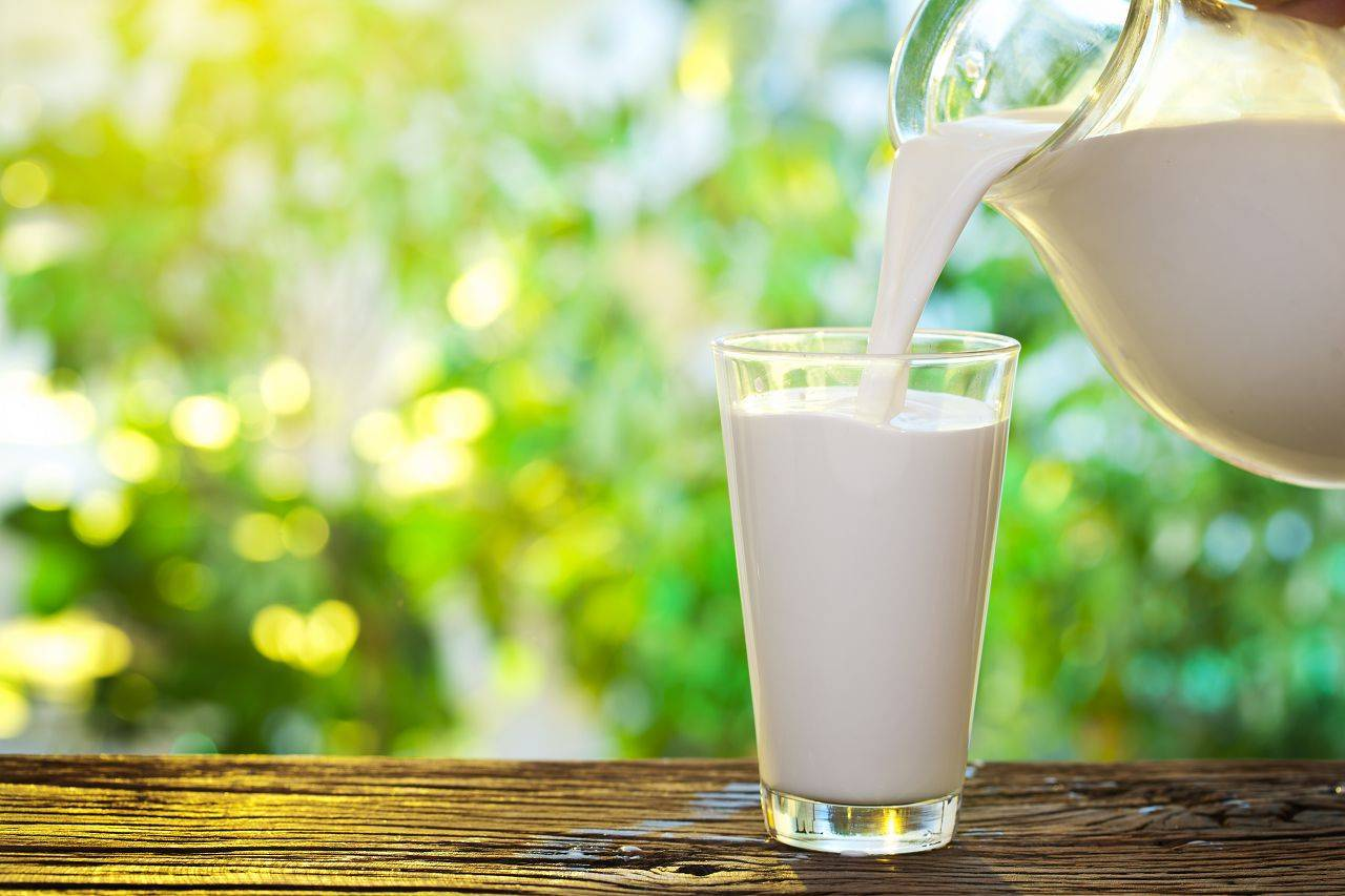 Причины, по которым горчит молоко у коровы