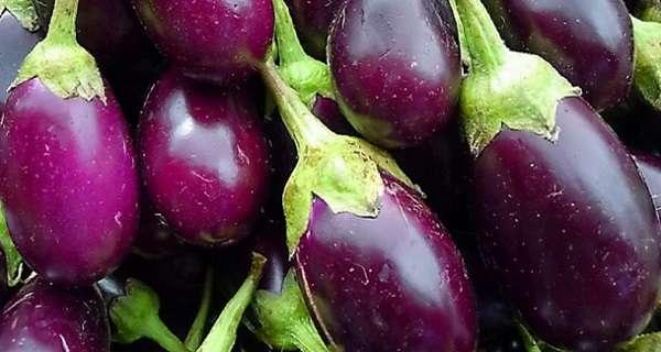 Баклажаны японский карлик: описание и особенности выращивания сорта