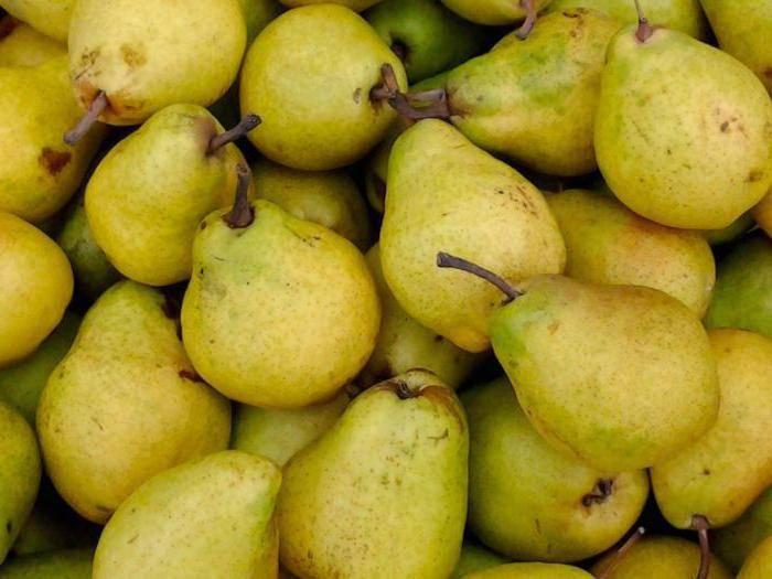 Высокая урожайность, хорошая зимостойкость, отличный вкус — груша орловская красавица