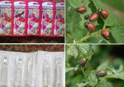 Инструкция по применению корадо от колорадского жука