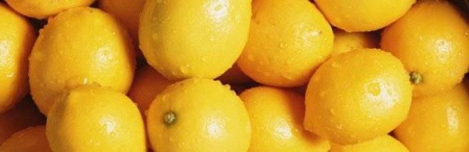 Лимон фрукт или овощ — ягоды грибы