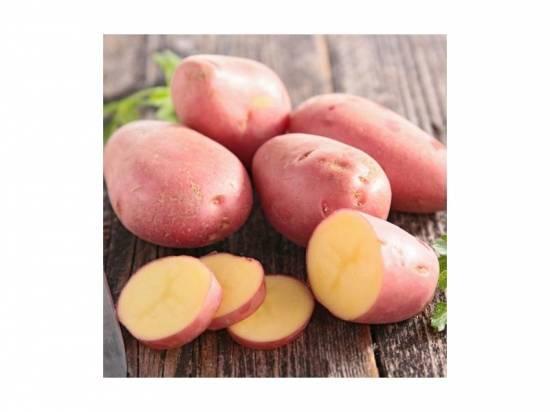 Отечественный сорт картофеля ажур: плюсы и минусы, отзывы огородников