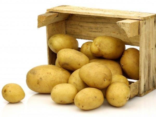 Как хранить картошку в квартире: где и в чем держать овощ зимой в домашних условиях, в том числе как правильно складировать его на кухне и в других помещениях?