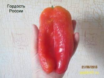 Перец гордость россии фото отзывы