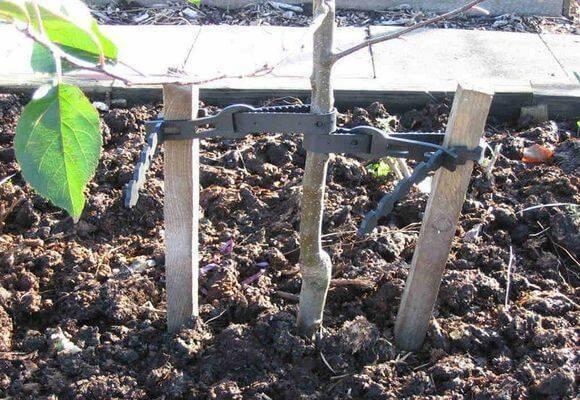 Основные правила утепления персика перед зимовкой